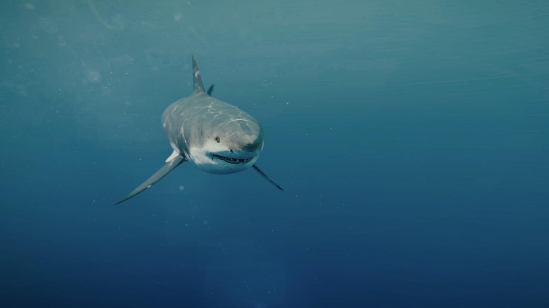 JAWS – 3D Shark